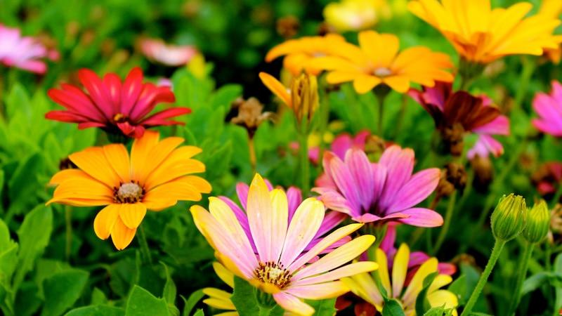 Der Anblick bunter Blumen vermittelt gute Laune und Leichtigkeit.
