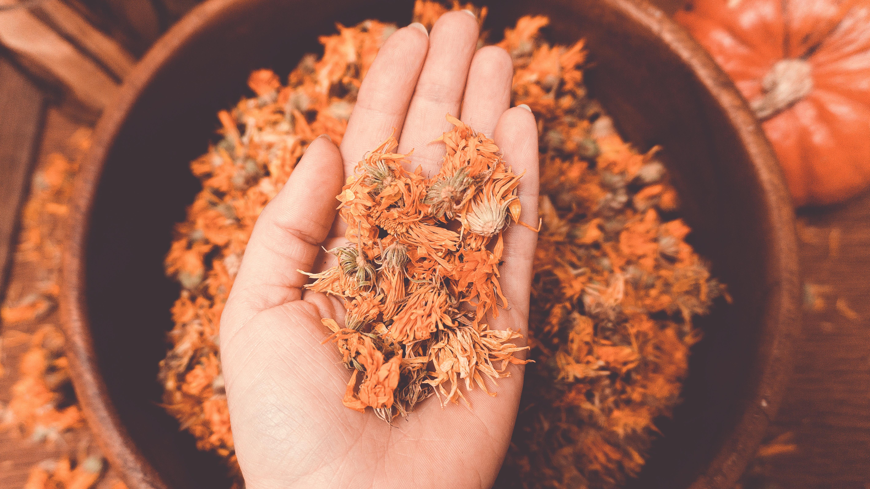 Die Blüten der Ringelblume können auch als Tee verarbeitet werden.