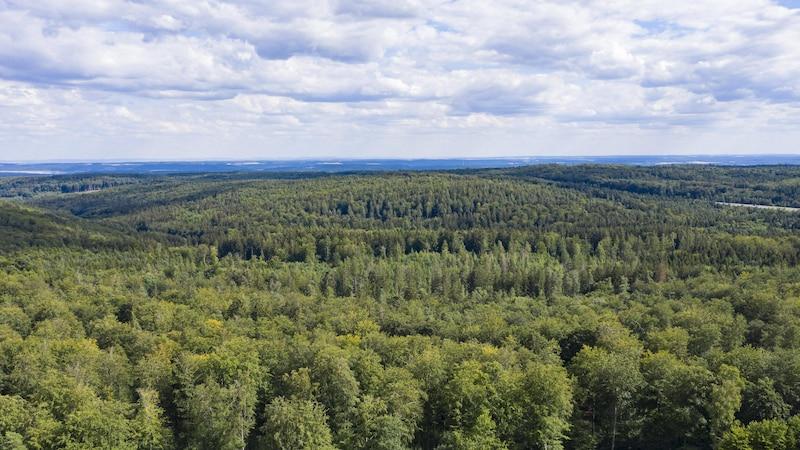 Der Bayerische Wald als perfekter Wanderort.