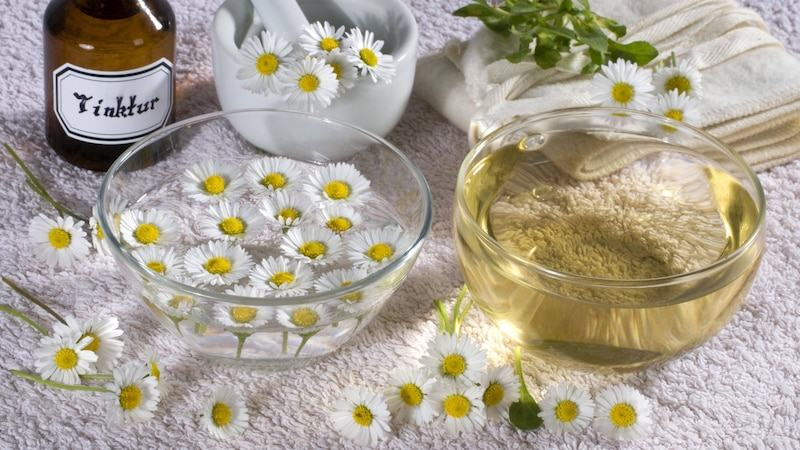 Sie können Gänseblümchen entweder als Topping auf Salaten essen, aus den Blüten Tee zubereiten oder daraus ein hautpflegendes Öl herstellen.