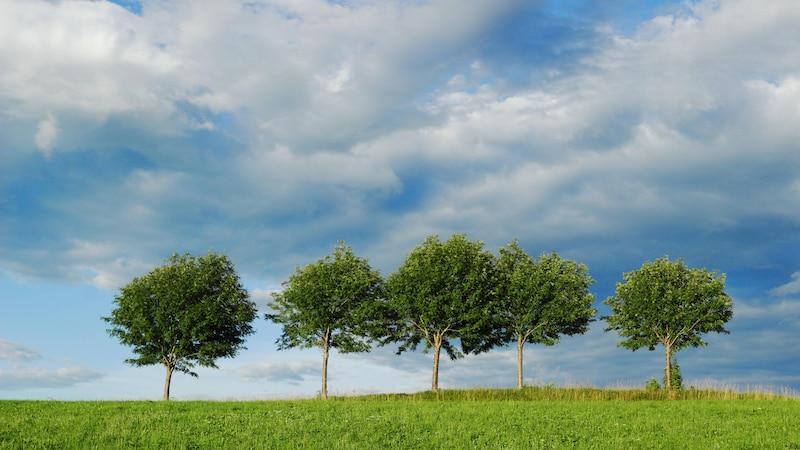 Bäume pflanzen fürs Klima: Infos und Bedingungen