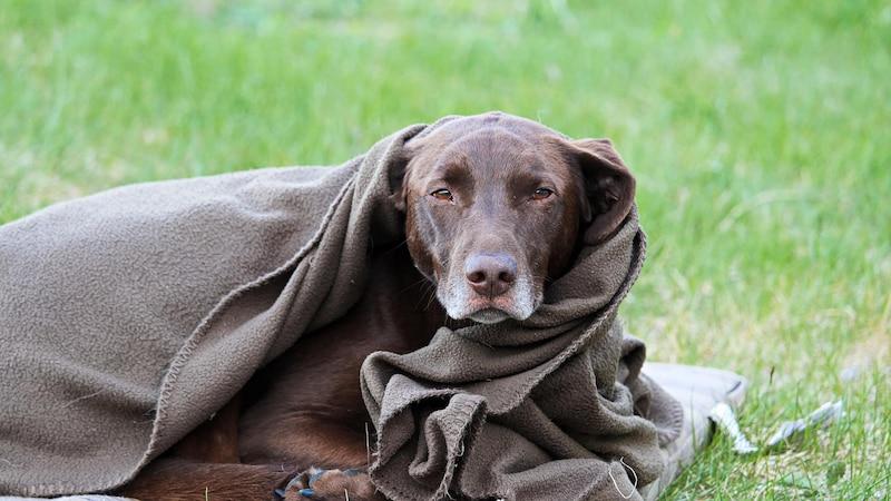 Hat Ihr Hund Schnupfen, gibt es einiges, was Sie tun können.