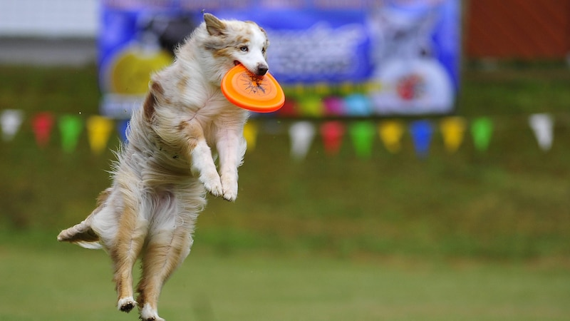 Sport erleichtert das Abnehmen des Hundes