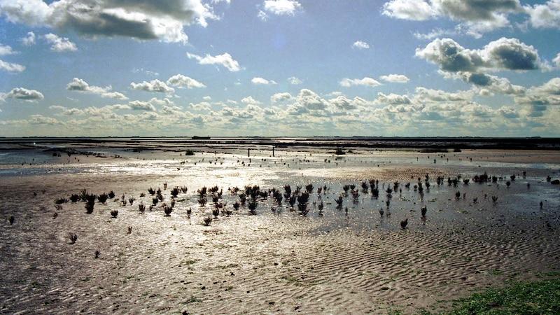 Einzigartige Landschaft: Das Wattenmeer an der Nordsee.