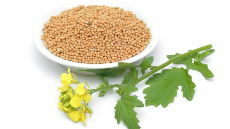 Senfkörner können durch die enthaltenen Senföle gegen Sodbrennen wirken.