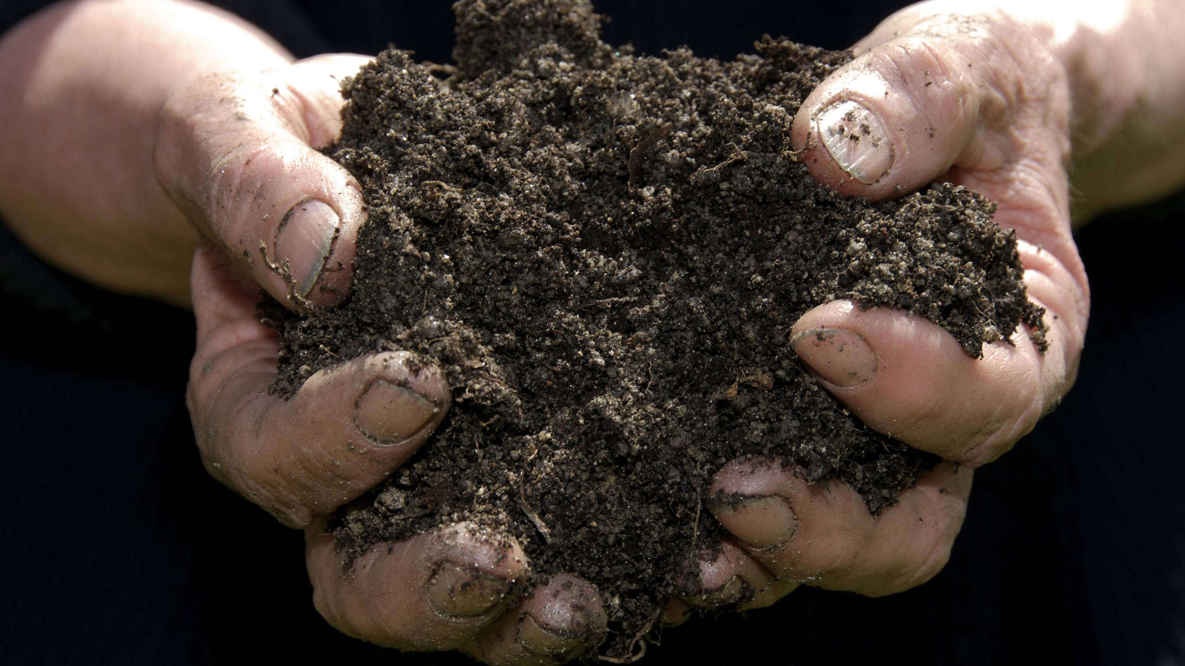 Alte Blumenerde aufbereiten: So lässt sich Ihre Erde wiederverwenden