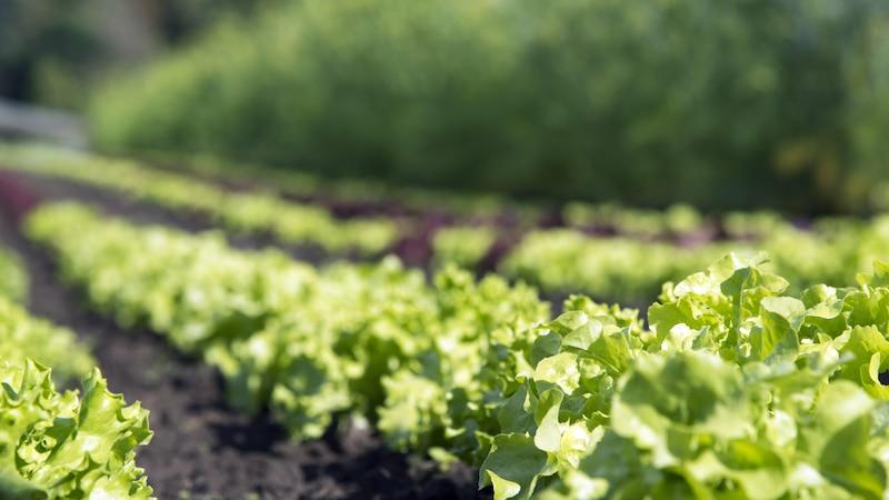 Wintergemüse anbauen: Dieses Gemüse sollten Sie pflanzen