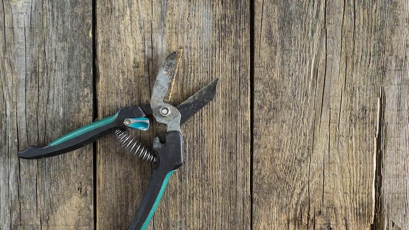 Vergessen Sie nicht, Ihre Gartenschere regelmäßig zu schärfen.