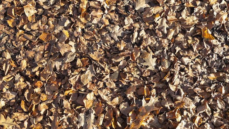 Laub kompostieren und den eigenen Dünger herstellen - so geht`s