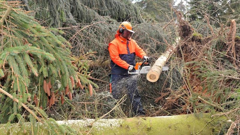 Nachhaltige Berufe - als Fortswirt kümmern Sie sich um die Pflege von Wald, Wiesen und Flur.