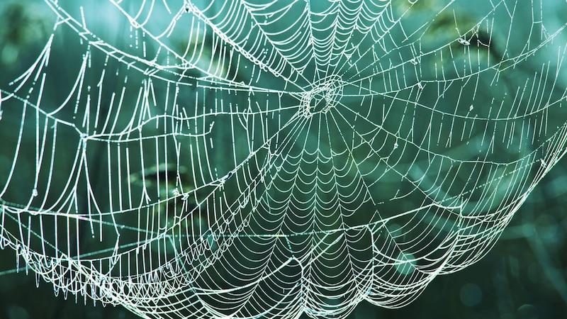 Spinnennetz basteln: 3 einfache Ideen
