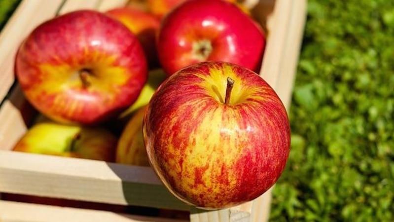 Allergien gegen Äpfel nehmen zu (Bild: Pixabay)