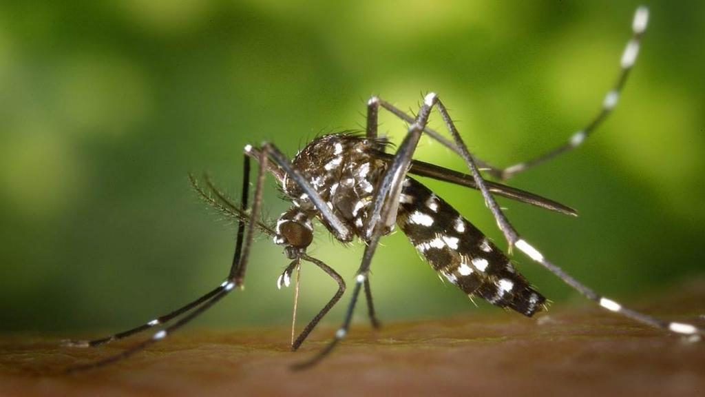 Mückenstiche verhindern [Foto: pixabay]