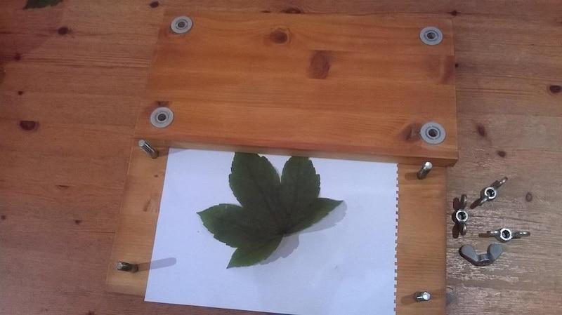 Mit einer Pflanzenpresse können Sie Blätter und Blüten leicht pressen und trocknen.
